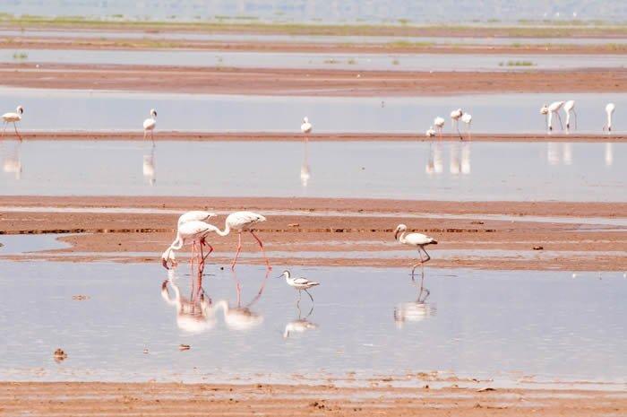 Flamencos en el lago Magadi