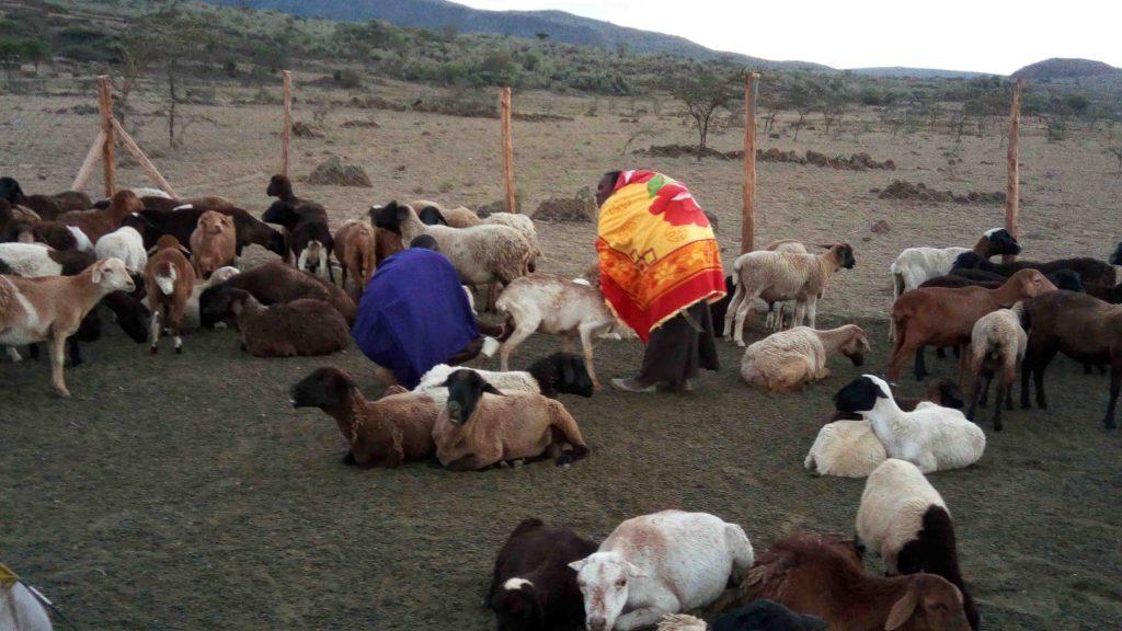 Aldea Masai