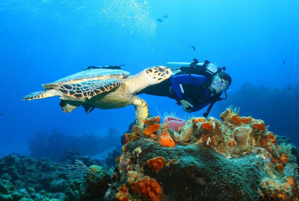 Diving Diani