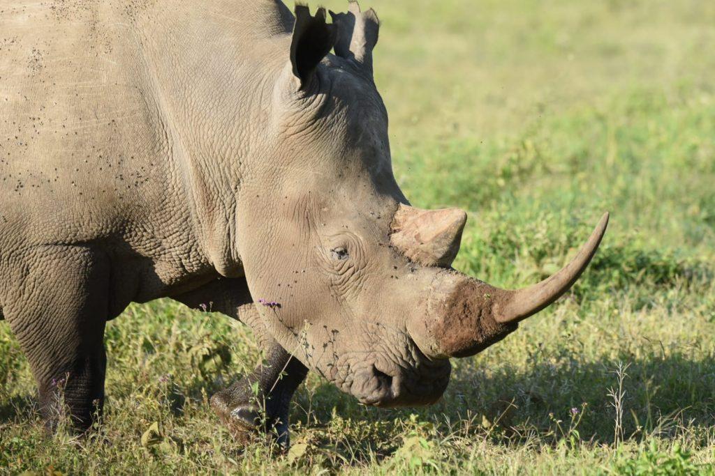 Rinoceronte en el Parque Nacional de Nakuru
