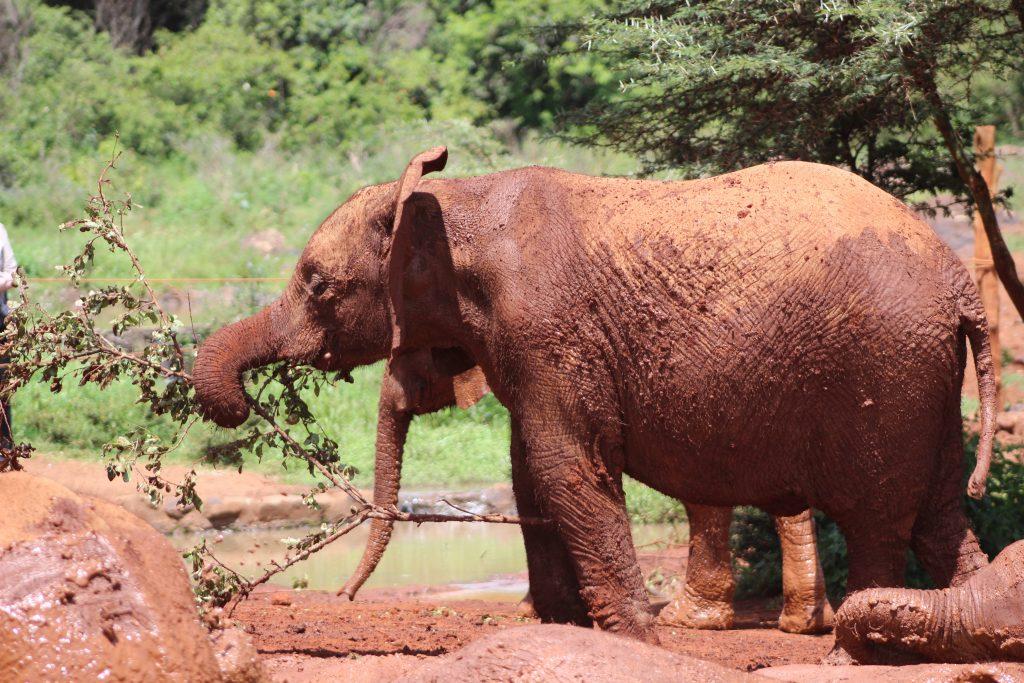 Orfanato de elefantes