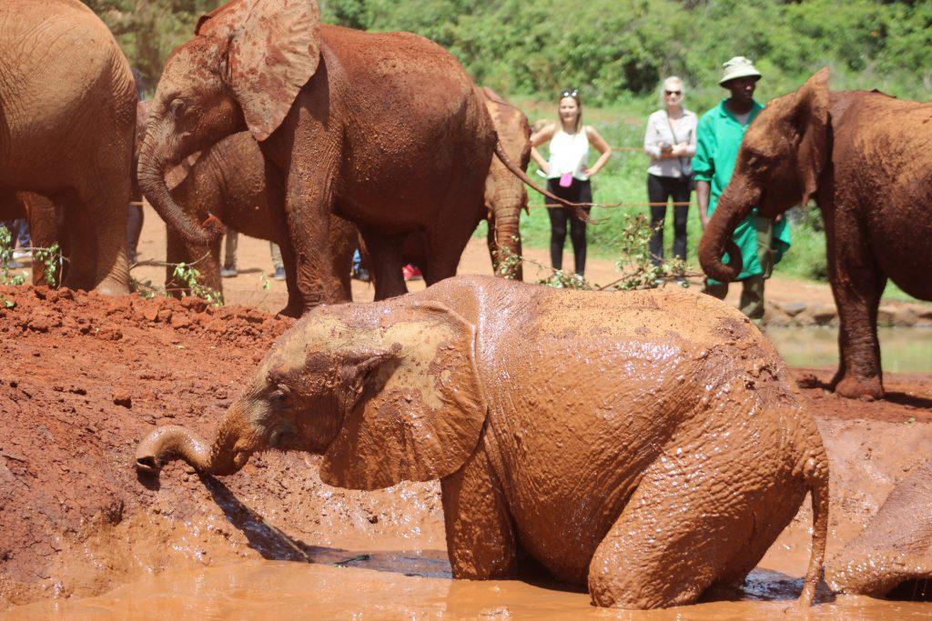 Elefantes en el Elephant Orphanage de Nairobi