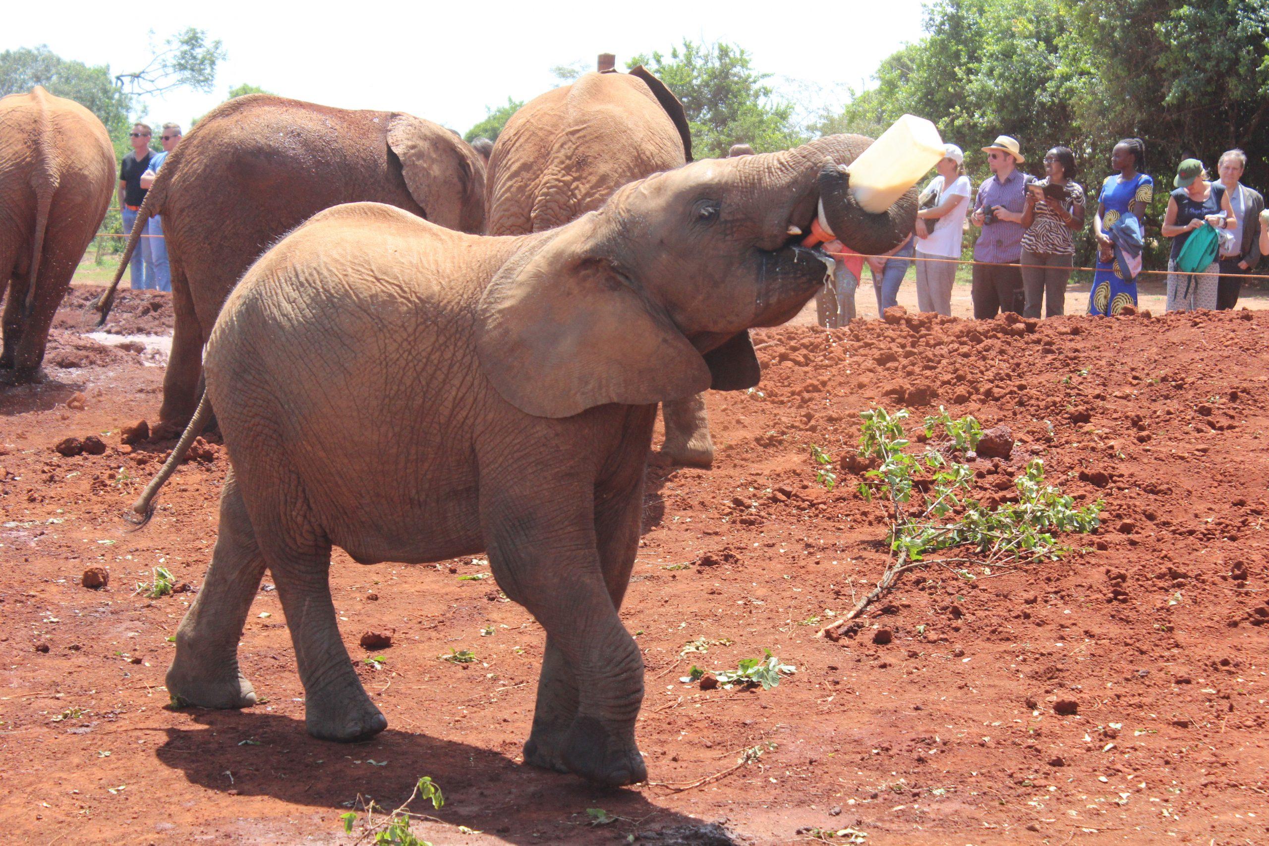 viajar a kenia con niños