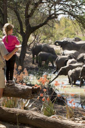 hacer un safari con niños